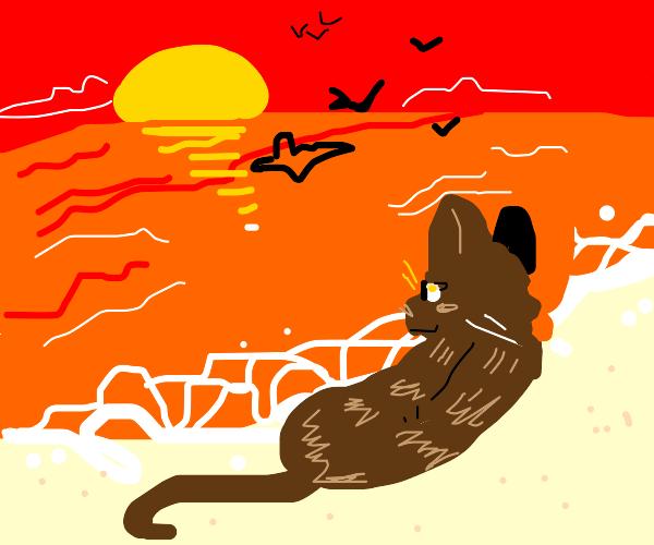 cat lying on the beach watching birds