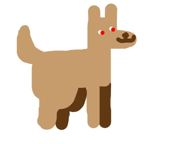 Doggo is happy
