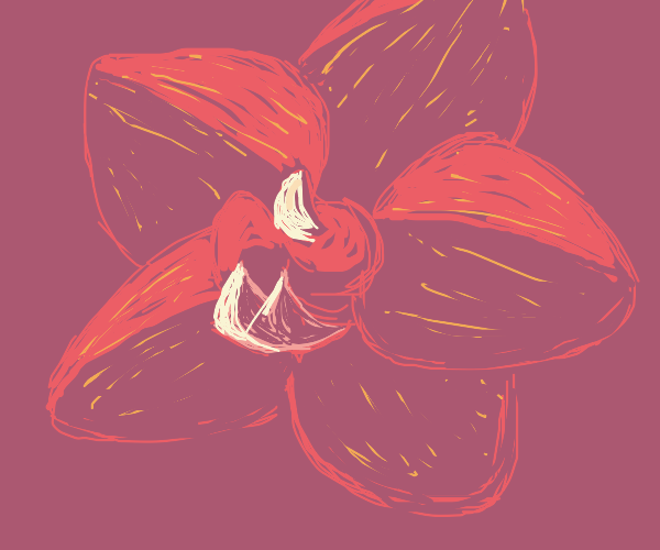 An orchid. Nothing else.