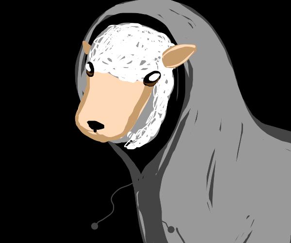 Sheep in a hoodie