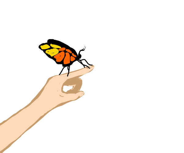 Moth or butterfly on someone's finger
