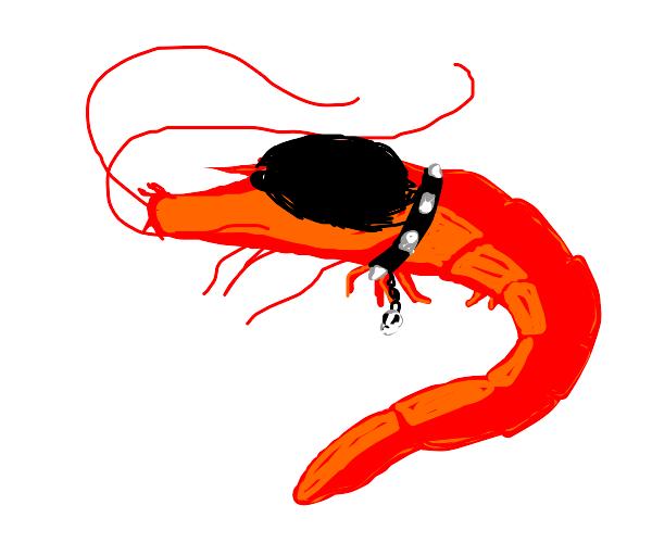 Emo Shrimp