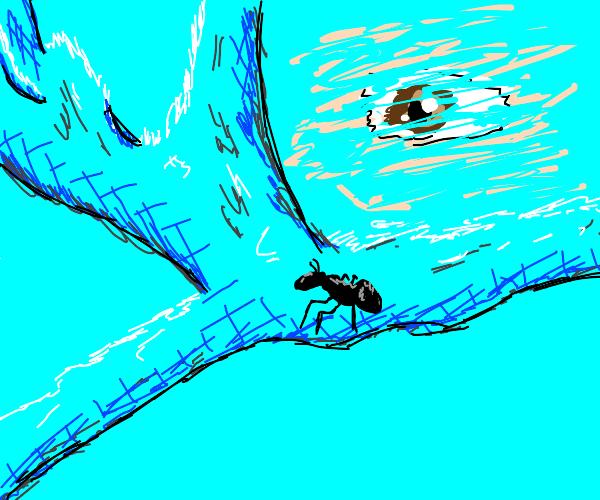 Pet Ant