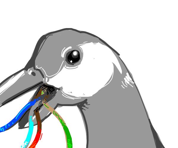 Canadian goose vomits wires
