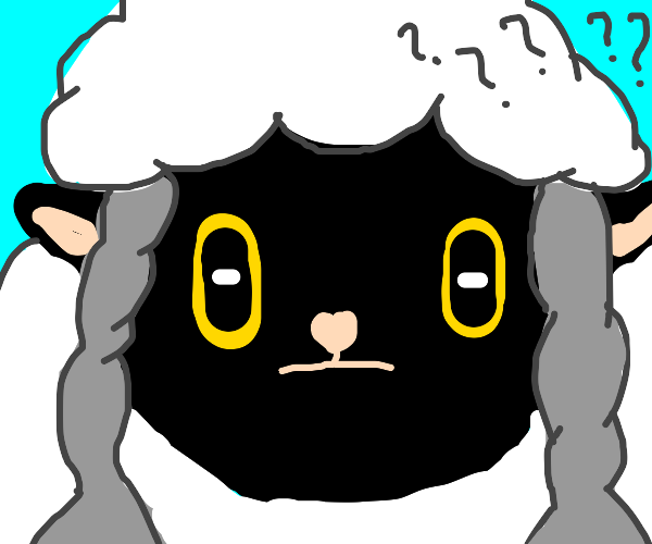 a confused sheep