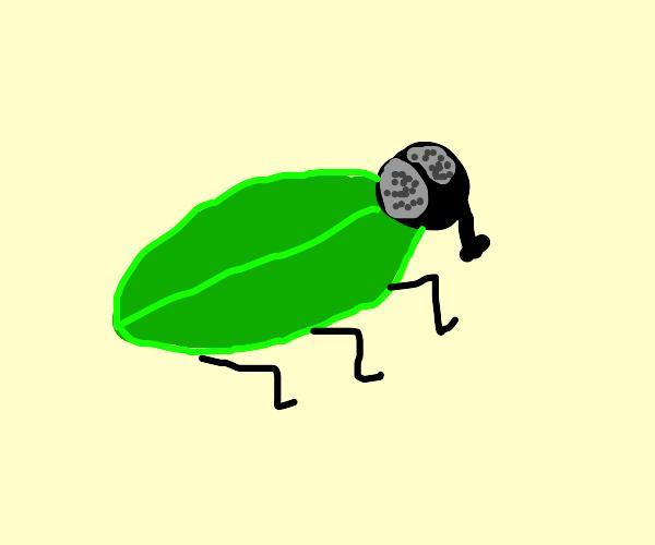 Fly Beetle