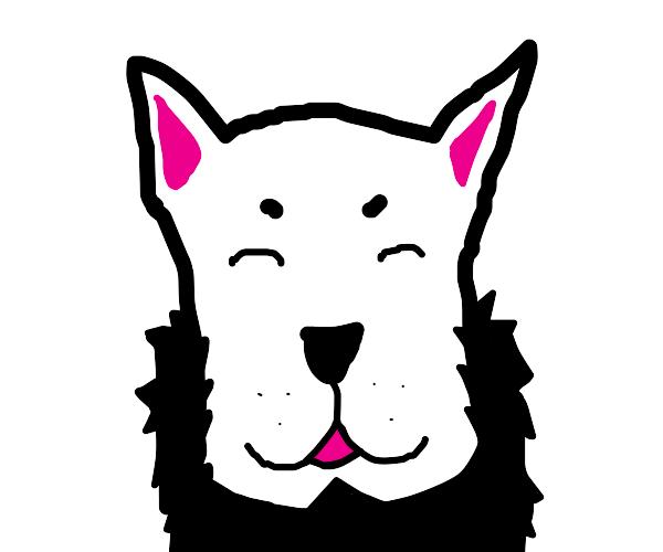 A dog with a beard