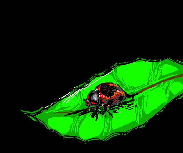 Demon Ladybug