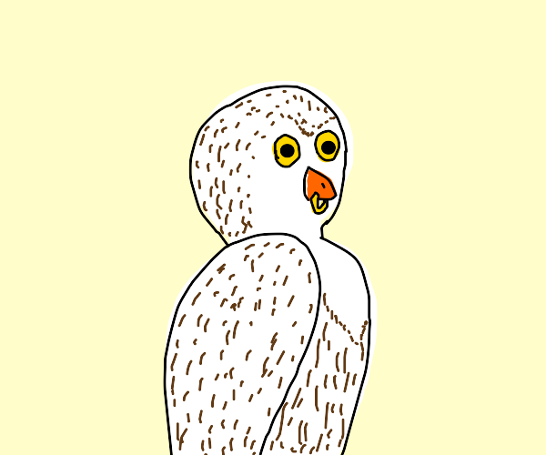 Snowy owl with beak piercing