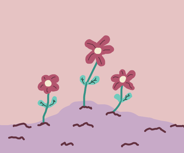 Some flowers growing out of pink dirt.