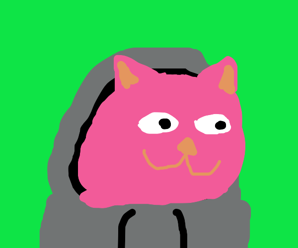 pink cat with grey hoodie