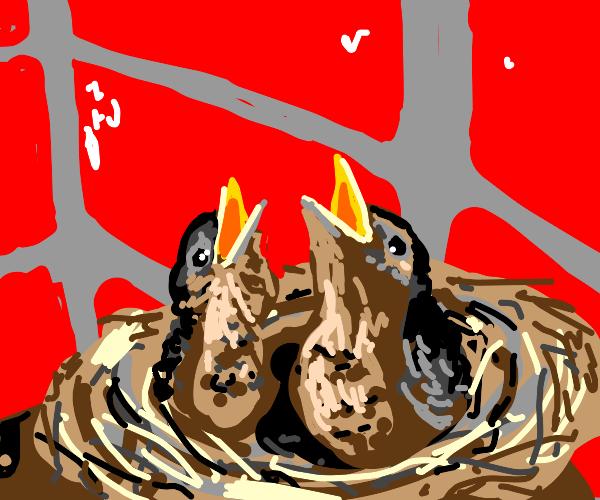 Birds Nest with Baby birds