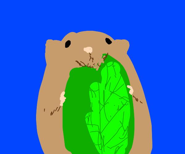 Hamster eats leaf