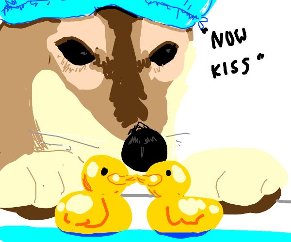 two rubber ducks kissing