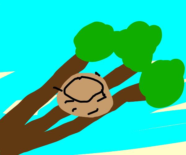 Nest on tree branch