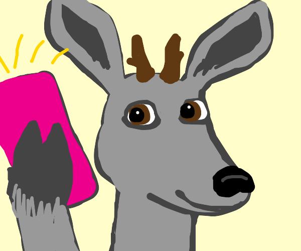 Gray deer takes a selfie