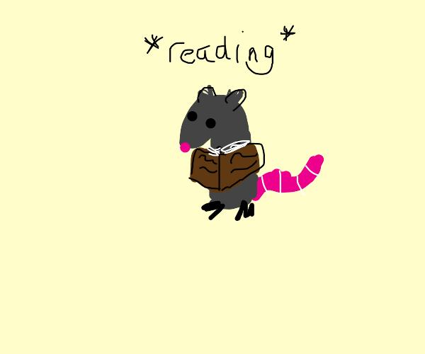 rat reading a book