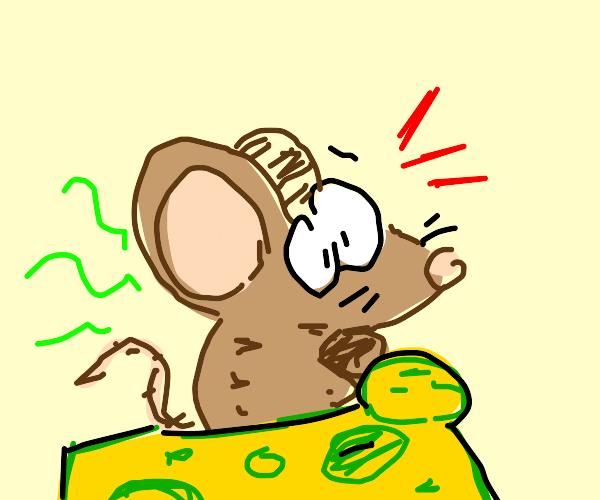 raton con un coche de queso