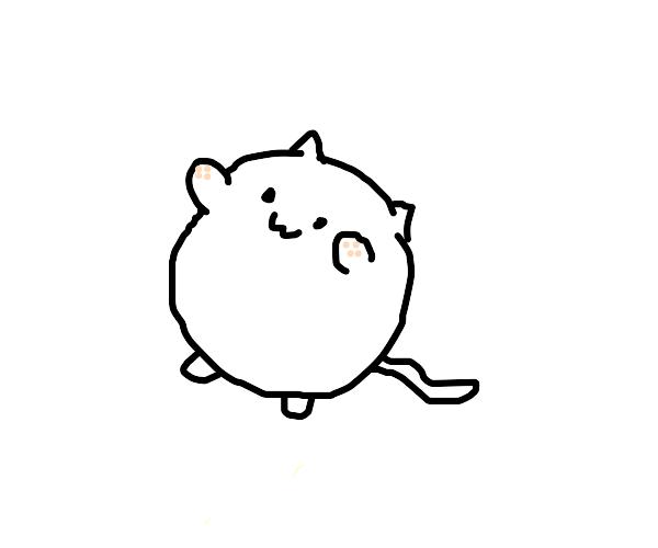 Cute OwO cat