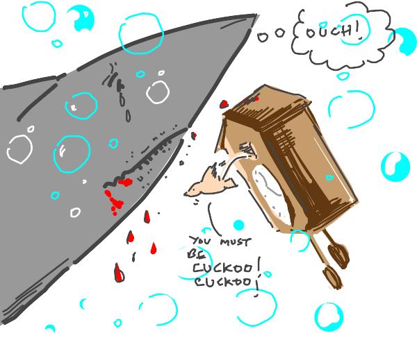 Shark bleeding from biting a cuckoo clock