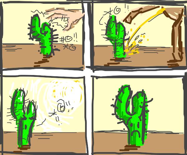 the sad life of a cactus