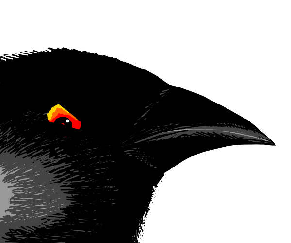 a crow giving you the evil eye