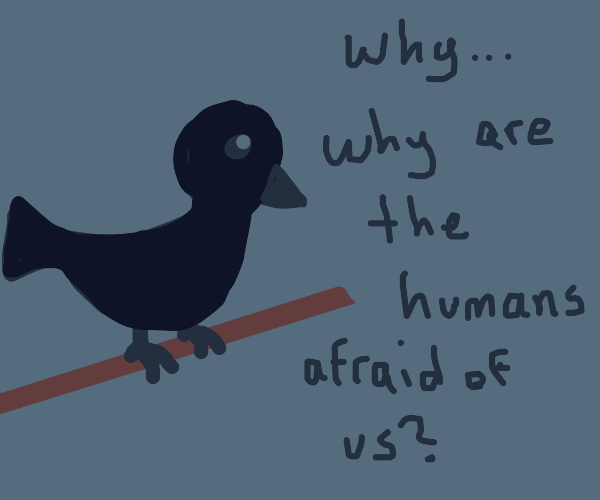 Raven faces reality