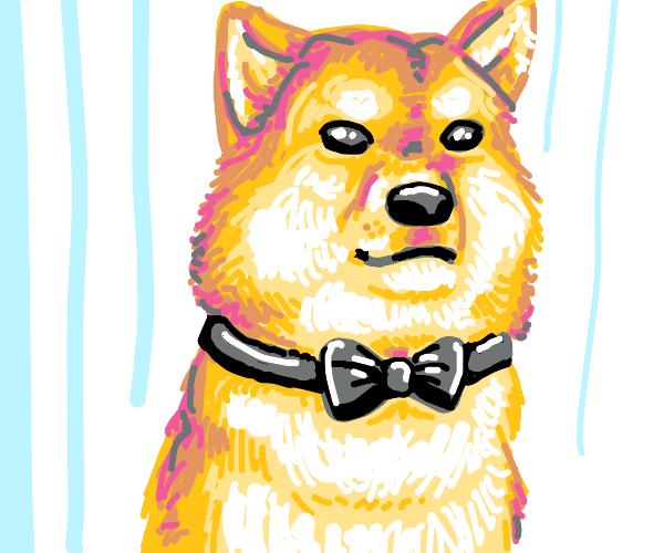 Fancy doge
