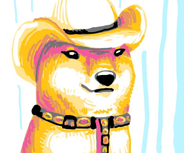 Cowboy shiba inu
