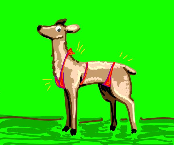deer in a bikini...