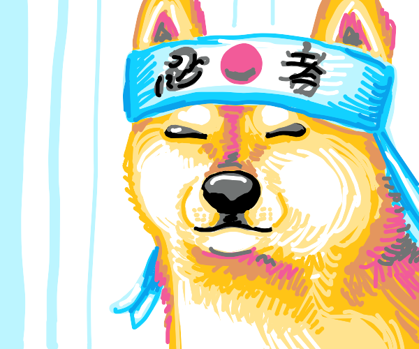 Such Shiba Inu, know much karate