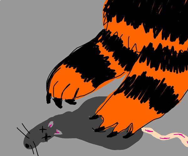 Tiger kills a rat