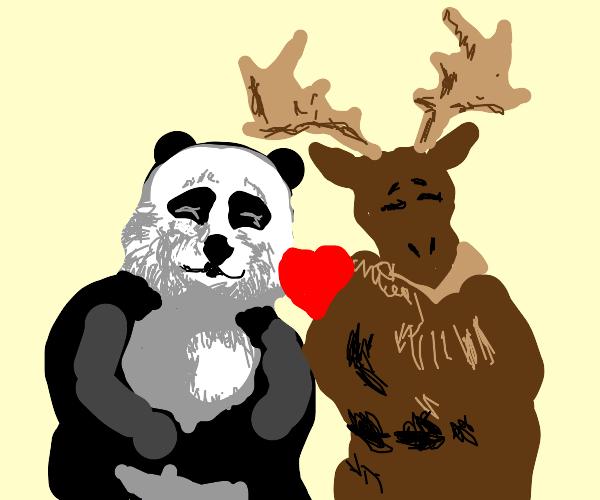 panda love moose