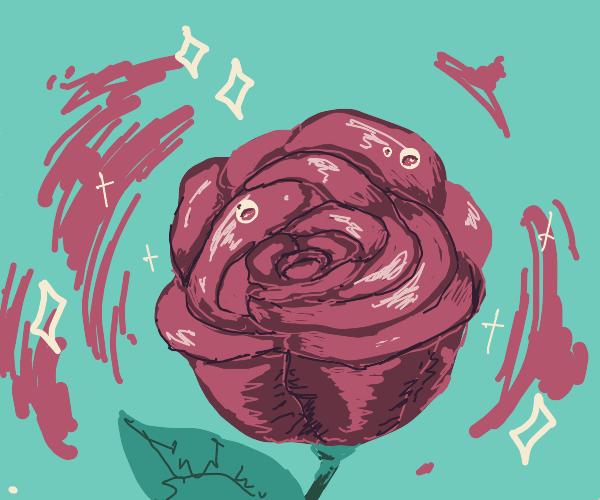 A Shiny Rose