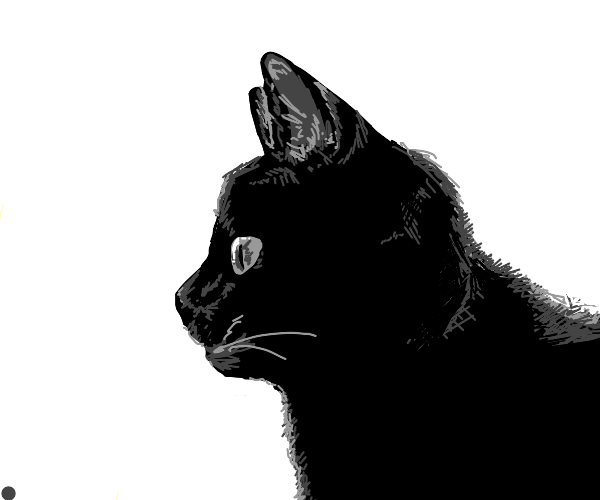 Black cat stares into the distance