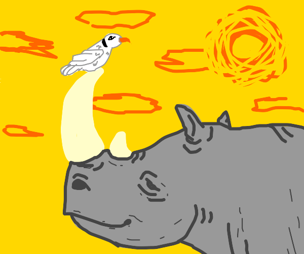 Seagull on rhino's horn