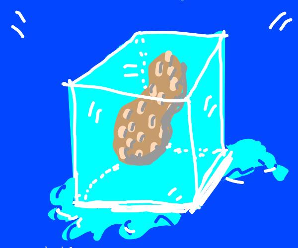 Frozen peanut in a block of ice