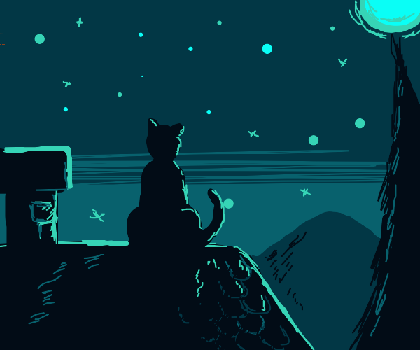 a cat watching the stars