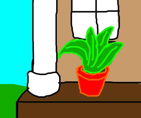 Plant in a pot outside