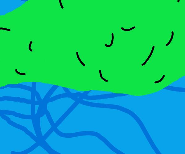 Broccoli Drowns in it's sleep