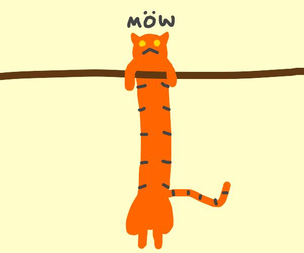 Cat is super long