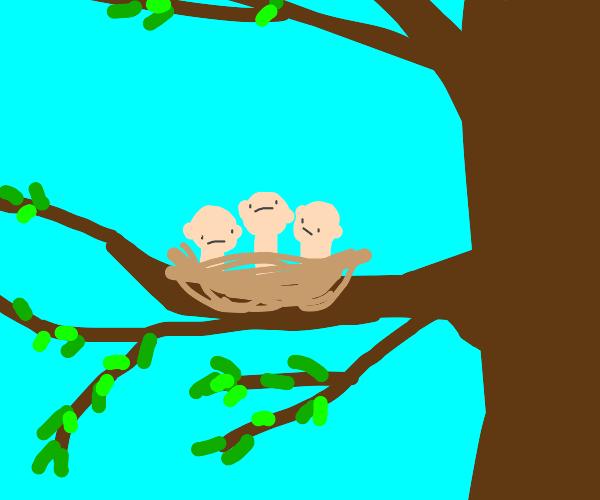 human babies in a birds nest