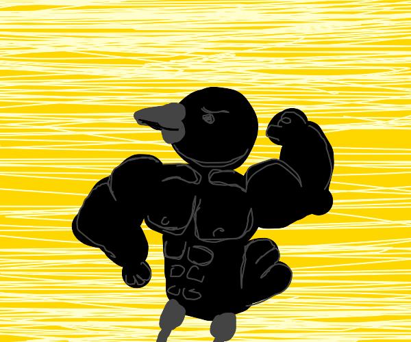 Buff crow