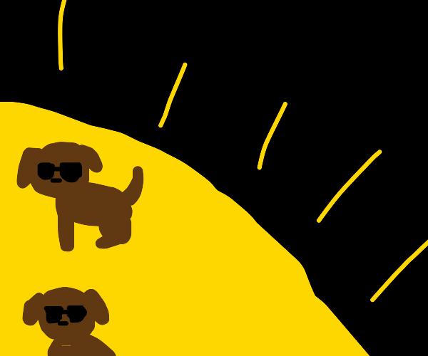 dog on the sun