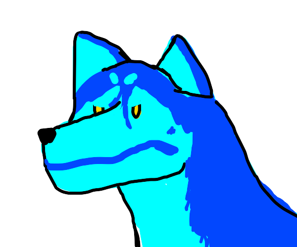 Turquoise Siberian Husky is angry