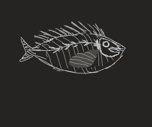 X-ray of a fish