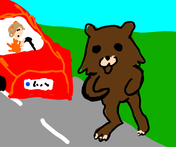 bear jumps in front of a car running