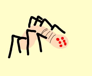 spider worm