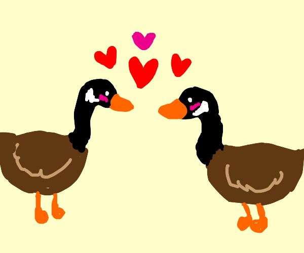 geese in love