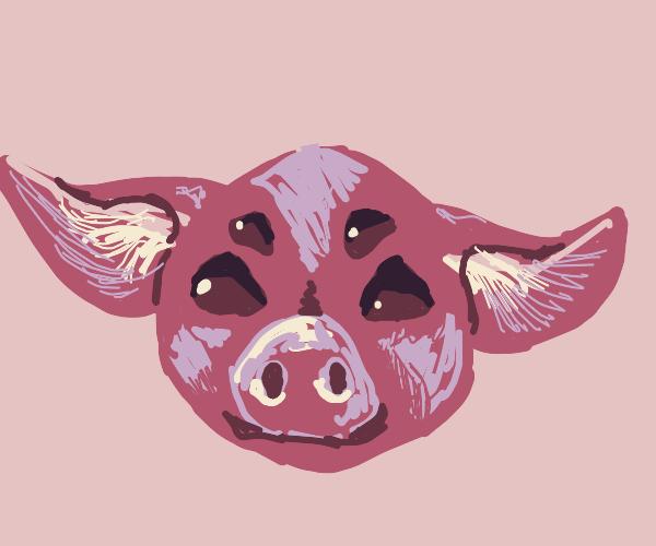 4 eyed pig